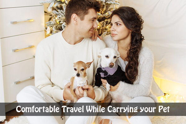 How to Ensure a Comfortable Travel While Carrying your Pet?